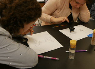Students examining insects